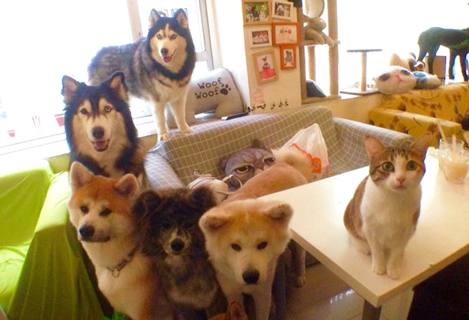 Can You Take Dogs Into Cafe
