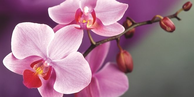 Your Guide to Chinese New Year Flowers
