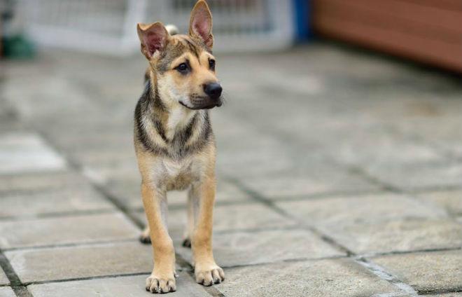 Hong Kong Dog Rescue