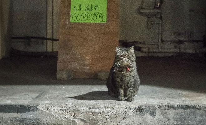 hong-kong-shop-cats