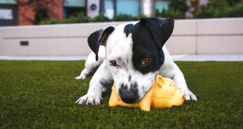 Pet-sitting dog hotels Hong Kong