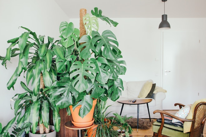 indoor plants - home decoration tips hong kong summer