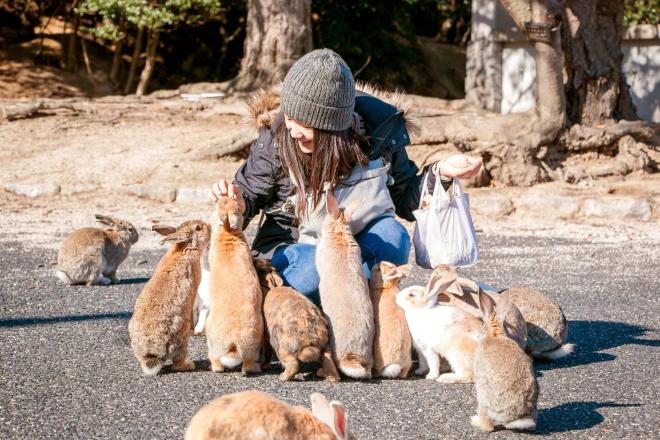 Okunoshima-rabbit-island