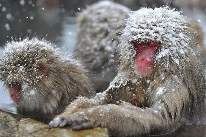 monkey-park-nagano