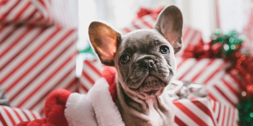 Localiiz recommends Christmas pet gifts