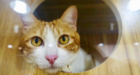 paws united cat adoption centre