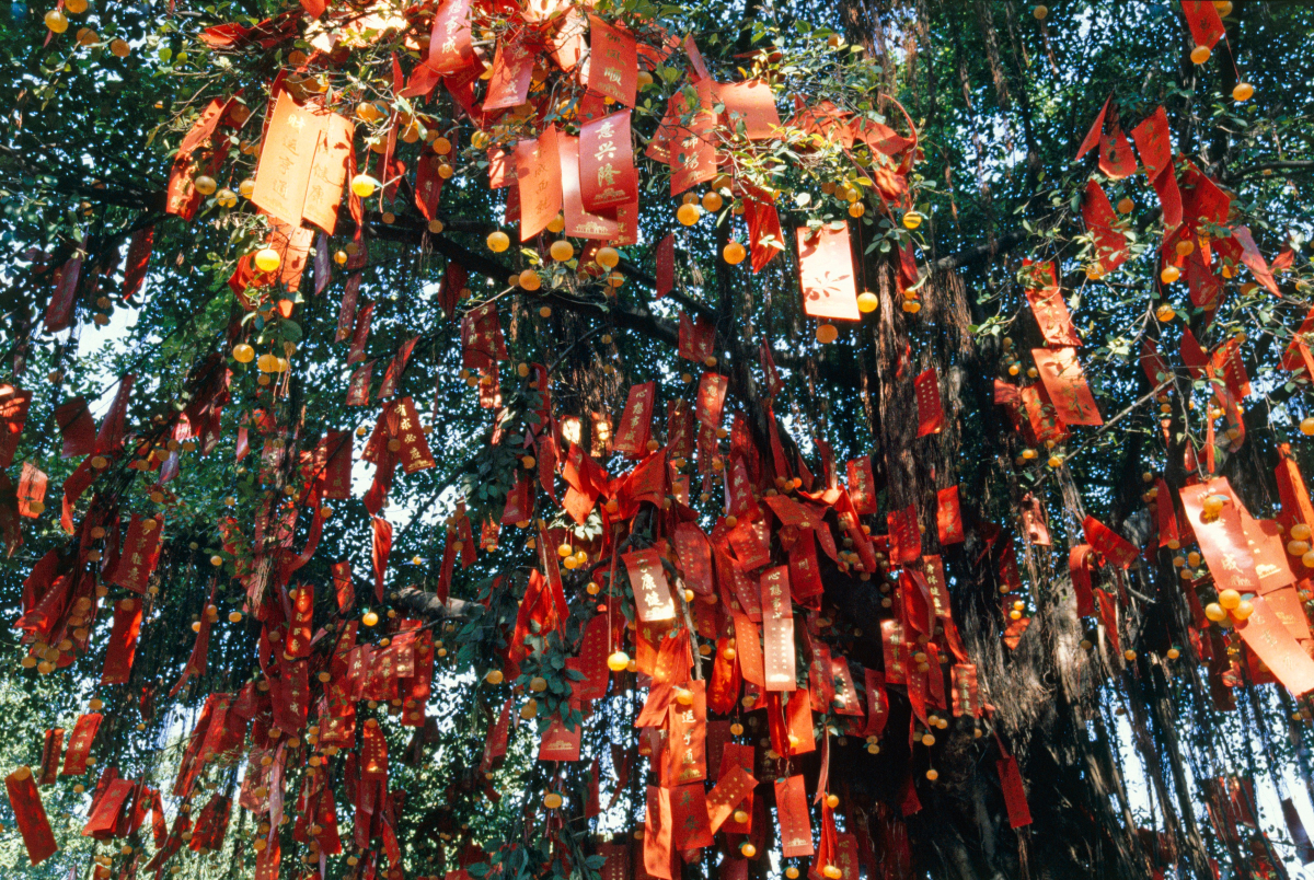 wishing tree hong kong chinese new year 2020